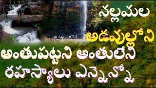 నల్లమల అడవుల్లోని రహస్యాలు  Secrets In Nallamala Forests Secrets Behind Shiva TemplesSaleshwaram