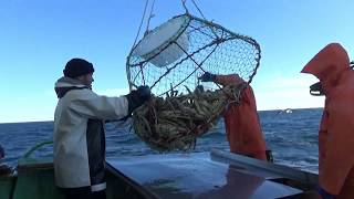 Ловля краба в баренцевом море правило вылова