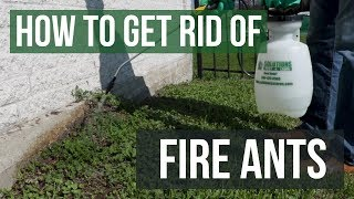How to Get Rid of Fire Ants (4 Easy Steps)