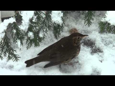 Super car video Vogels In De Winter 2012