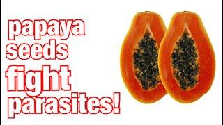 Eat Papaya Seeds For Parasite Cleanse Part 1