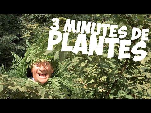 3 minutes de plantes avec Louis de Funès !