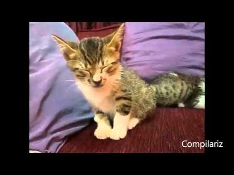 Những pha ngủ gật cực đáng yêu của động vật