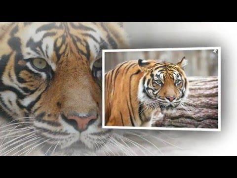 Zoo Jihlava ( fotografie - Ondřej Chvátal )