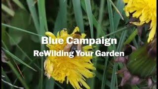 Thumbnail for Blue Campaign - Rewilding Your Garden