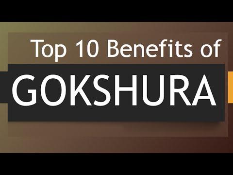 Video Top 10 Health Benefits of GOKSHURA - Amazing Health Benefits of Gokshra Herb