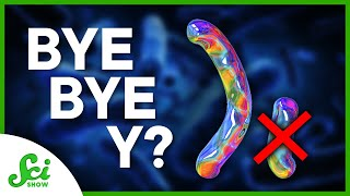 Why Y Chromosomes Won't Be Around Forever
