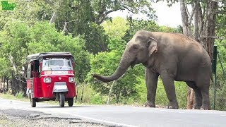 Behemoth of an elephant waits by the village demanding food