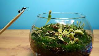 Приключения муравьев в террариуме с хищными растениями! Кто выживет?
