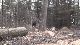 12-30-2011 Tree Removal Dolmar PS-7900