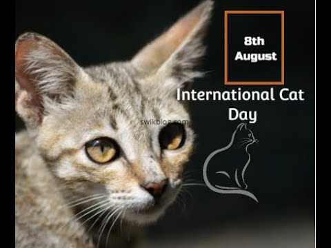 International Cat Day 2020- Unknown Facts about the beautiful species of Cats