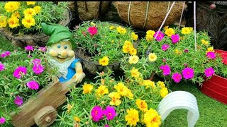 ALL ABOUT PORTULACA || BEAUTIFUL BLOOMING FLOWERS || MY LIL GARDEN