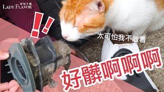 貓家大掃除!這樣掃才乾淨【好味貓知識】