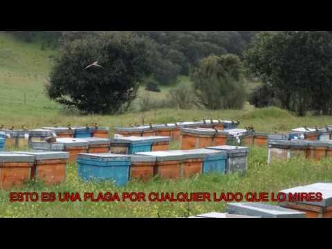 , title : 'Abejarucos = a Ruina