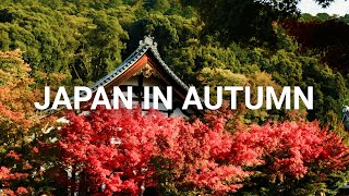 My Autumn trip to Japan - 14 Days in Japan