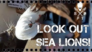 REVIEWING: Sea lion attack on young girl video