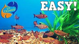 Top 10 Aquarium Fish For Beginners! Your First Aquarium!