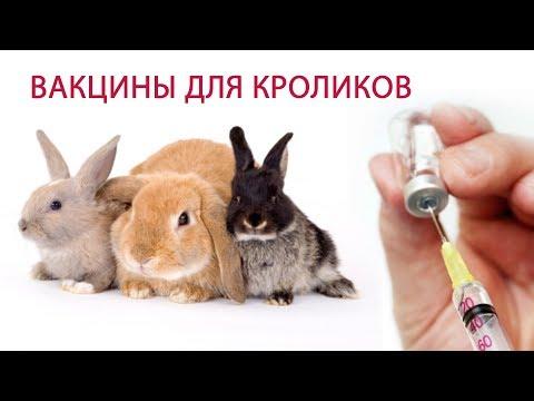 Эпидемия вич и гепатит