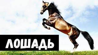 К чему снится Лошадь видео -К чему снится ЛОШАДЬ или видеть КОНЯ во сне