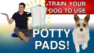 How to Potty Train your Dog With Potty Pads
