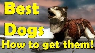 skyrim: Where to get Best Pet Dog Follower
