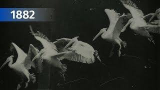 Хронофотография   Этьен-Жюль Маре и его фоторужье (Étienne-Jules Marey)   Интересное кино #2