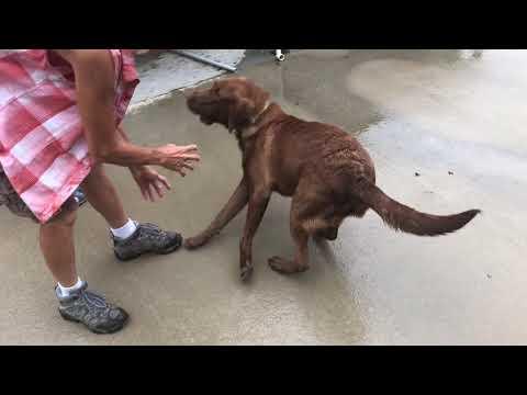 Video: Rickles plays