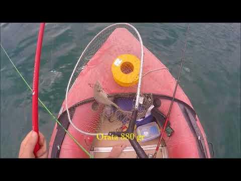 Quali i navigatori per pesca sono