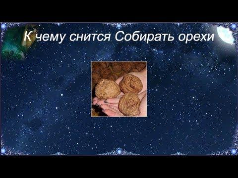 К чему снится Собирать орехи (Сонник)
