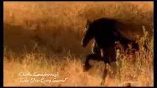 Charlie Landsborough - Love You Every Second (HQ :) + lyrics