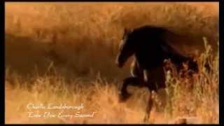 Charlie Landsborough - Love You Every Second (HQ :) + lyrics