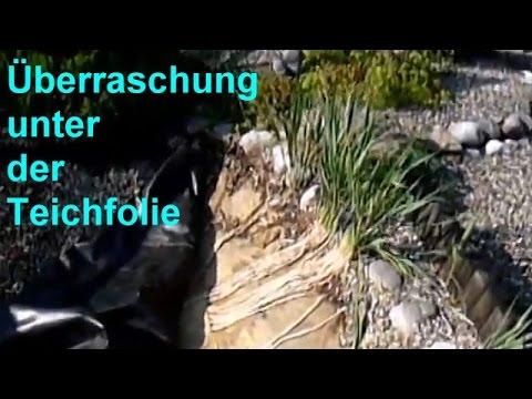 Teichfolie durchstochen - Überraschung unter der Teichfolie - Wurzel durch PVC Folie im Pflanzfilter
