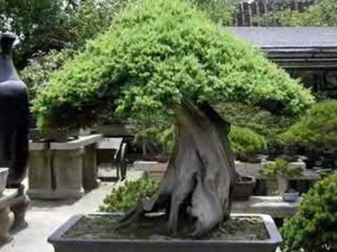 Slideshow bonsai Quốc Tế