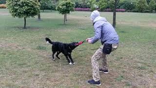 Nie baw się z psem...GRAJ!