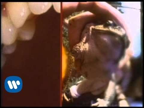 The Flaming Lips - Frogs [Official Music Video]