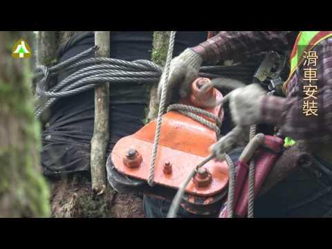 臺灣人工林收穫作業實務示範影片(5/8) —集材柱架設流程