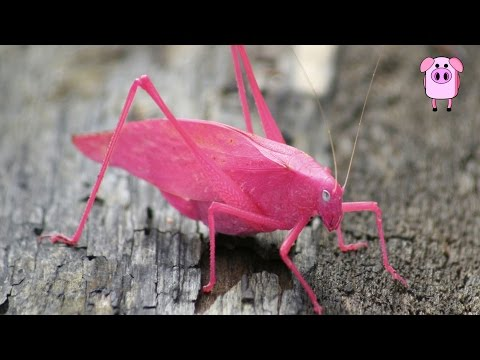 10 Cutest and Most Colourful Insects On Earth