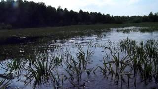 Рыбалка на реке поля шатурского района