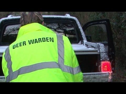 Deer warden deals with RTA