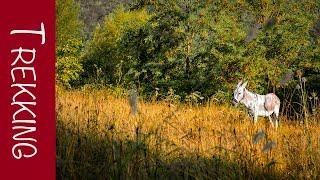 trekking Donkey Adventures: Sulla via dei lupi EP.1