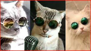 Приколы с котами #8 милые коты, lovely cats