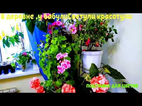 Комнатные цветы и растения в  оформлении интерьера.