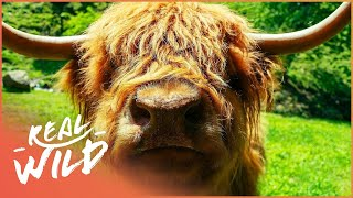 The Sacred Ox And Eagle - Their Spiritual Meaning | Amazing Animals | Wild Things Documentary