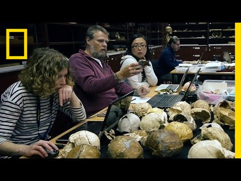 See How Scientists Identified Our New Human Ancestor | National Geographic thumbnail