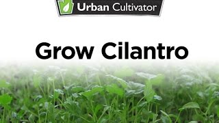 How to Grow Cilantro Indoors | Urban Cultivator