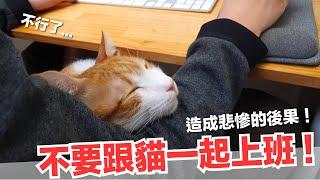 跟蛋捲上班很痛苦?跟貓工作造成悲慘的後果...【好味貓日常】EP59