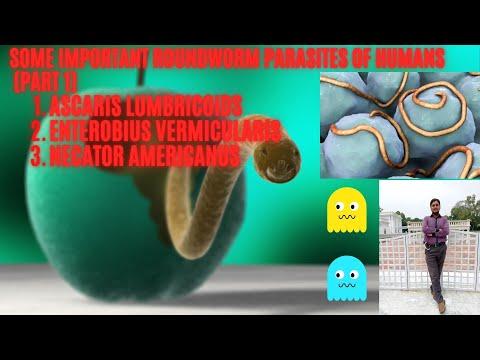 A giardia profilaktikus kezelése