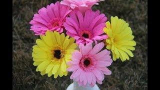 Como Hacer Una Flor De Papel Facil / Gerberas - Flor De Papel / Gerbera Easy Paper Flower