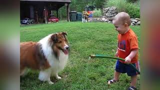 Собаки и дети, лучшие друзья  Dogs and Baby, the best video