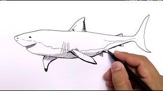 Download 92 Sketsa Gambar Ikan Hiu HD Terpopuler